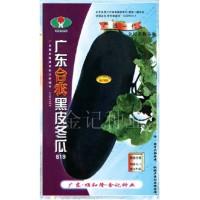 广东台农黑皮冬瓜619
