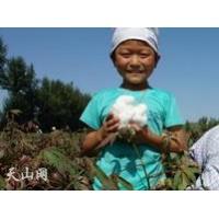 大型棉花采摘机价格 我爱发明采棉机 周红灯棉花采摘机