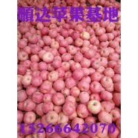 河南红富士苹果批发市场供货充足价格下降条纹纸袋红富士苹果价格