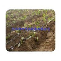 供应塑料滴水带 农业灌溉专用/安阳市滴灌厂家