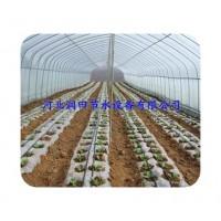 安阳市厂家直销农田灌溉滴水带 承接滴灌工程