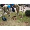 石狮蚶江白蚁防治-靠谱的白蚁防治嘉信白蚂蚁防治提供